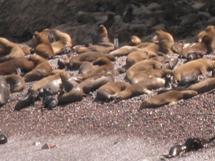 Ballestas eilanden, Peru