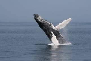 walvis spotten ijsland