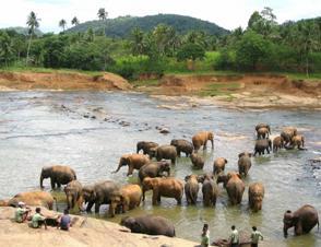 Pinnawela Olifantenweeshuis