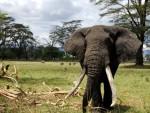 Serengeti National Park safari maatwerk reizen olifanten