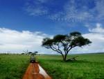 Serengeti National Park safari maatwerk reizen