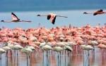 Tanzania Serengeti Flamingo