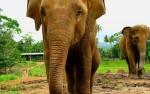 Olifantenweeshuis, Pinnawela, Sri lanka