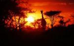 Serengeti night safari