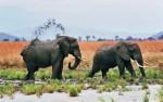 Mikumi, olifanten